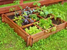 Daržo augalų dėžė 9-dalių